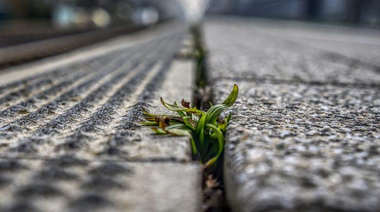 tuer mauvaises herbes
